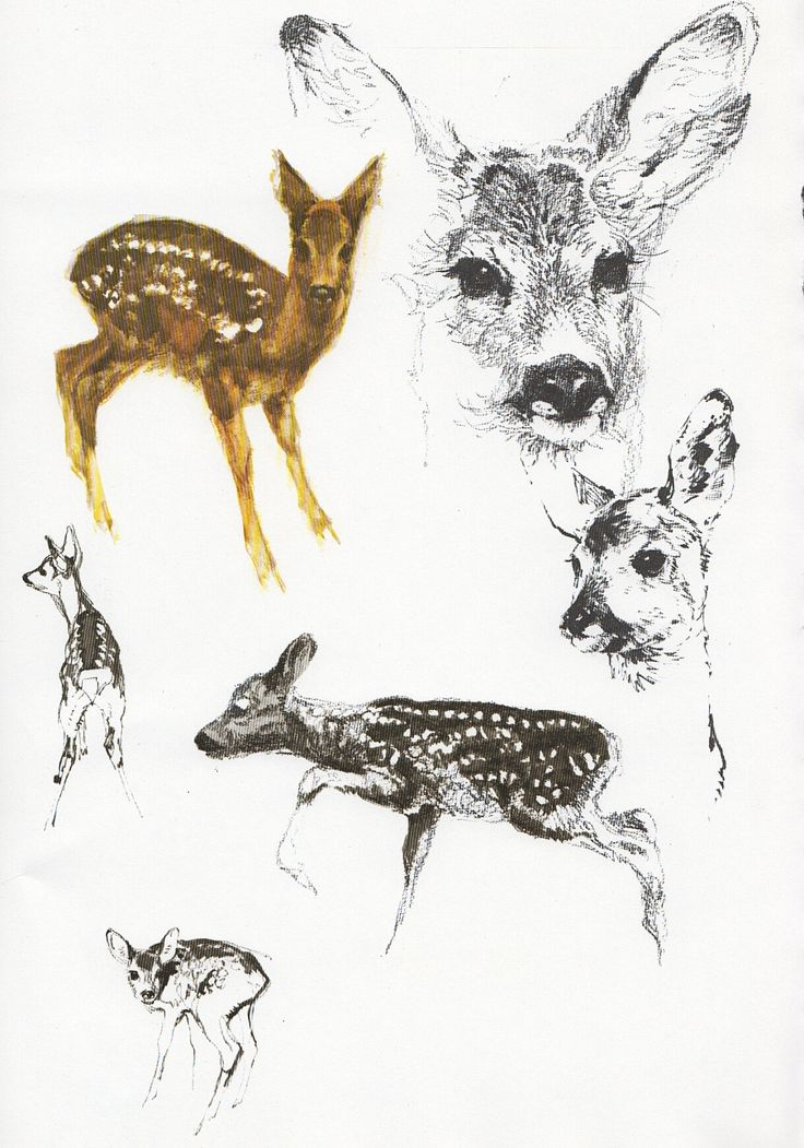 how to draw a baby deer easy