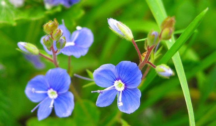 Pierwsze profesjonalne e-doradztwo florystyczne www.florysta3d.pl