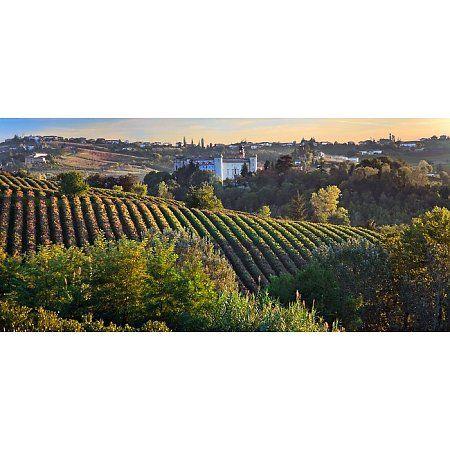 www.wijnkraam.nl - Piemonte, de noordwestelijke hoek van Italië, grenst in het westen aan Frankrijk, in het noorden aan Zwitserland, wordt in het zuiden gescheiden van de Middellandse Zee door de smalle kuststrook van Ligurië en in het oosten ligt Lombardije en de vallei van de rivier de Po. Aan alle kanten, behalve de oostzijde, is Piemonte omringd door de Alpen. De naam Piemonte betekent 'voet van de berg'.