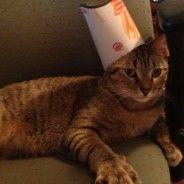 Burger Kings new mascot   Stuff On My Cat