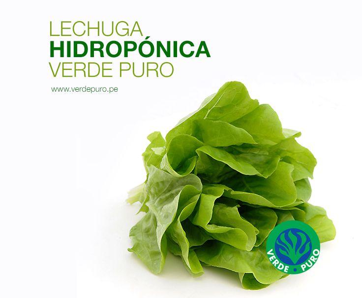 #Lechuga Hidropónica #VerdePuro. #ExpertosEnEnsaladas