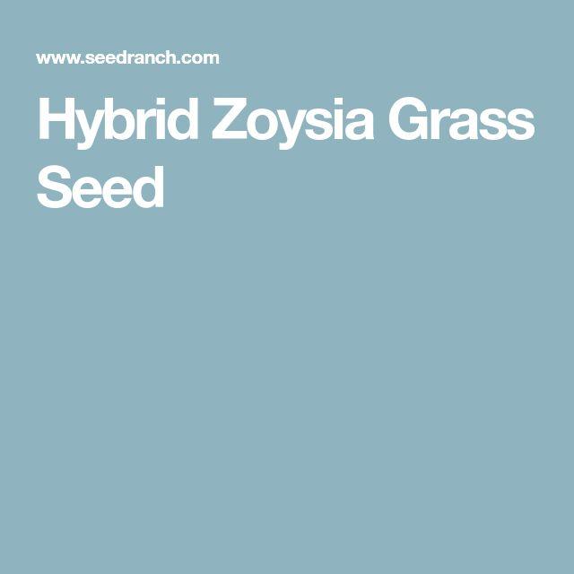 Hybrid Zoysia Grass Seed