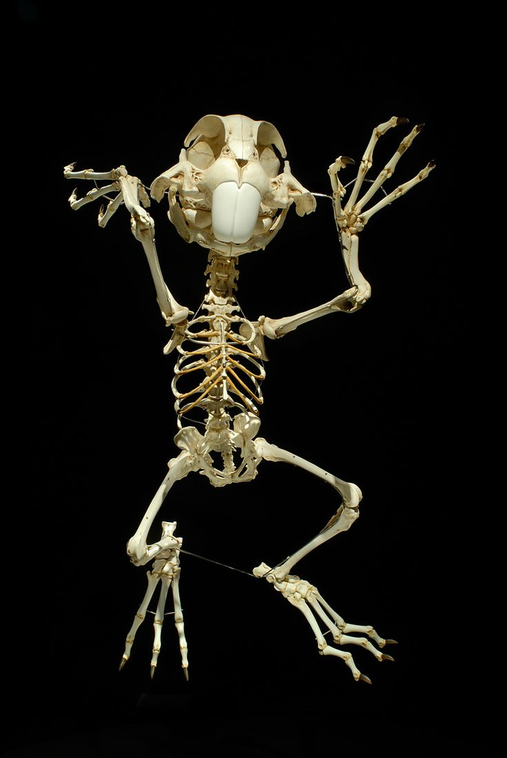 Bugs Bunny - This Is What The Skeletons Of Famous Cartoon Characters Would Look Like | IFLScience