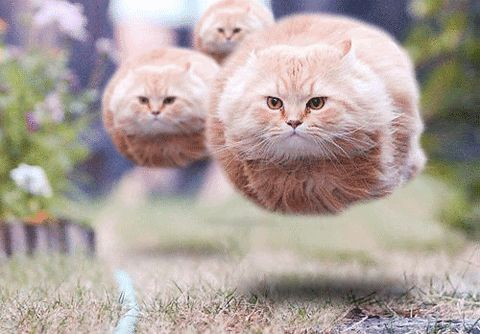 floating super cats gif - click on source link for movement