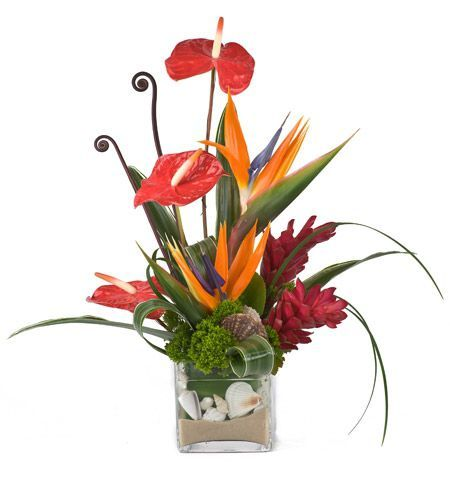 Peoplesflowers Albuquerque Florist Same Day Flower Delivery Tropical