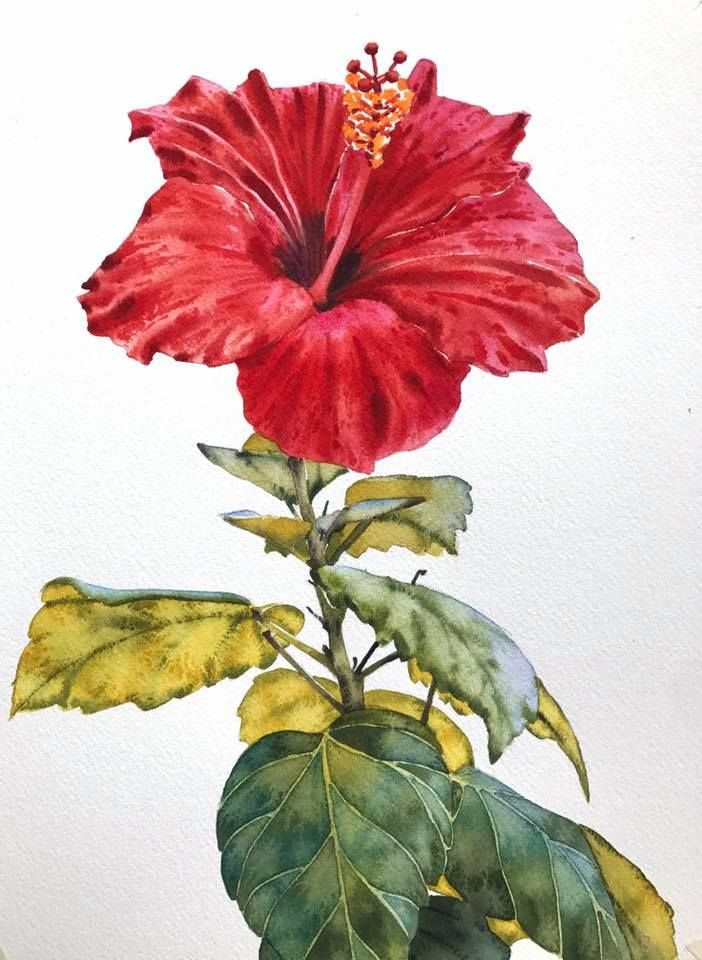 Idea By Kaati Fetokai On Tropical Flower Art Painting Flower