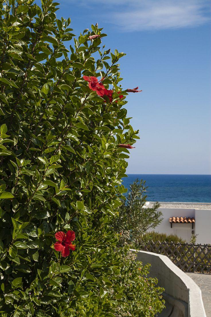 """Hibiskus på hotellområdet, """"Sunwing Kallithea Beach"""".   http://halsoresor.se #hälsa #hälsoresor #Rhodos ( Foto: Copyright © Emelie Hallbäck, All Rights Reserved.)"""