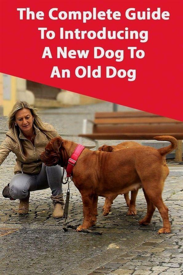 Dog Training Gunshots Peter Caine Dog Training Tosh 0 Dog