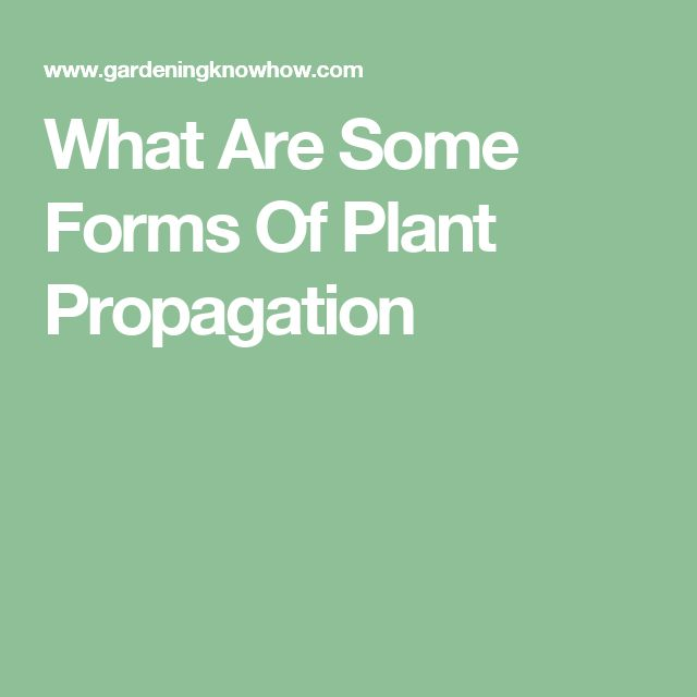 What Are Some Forms Of Plant Propagation