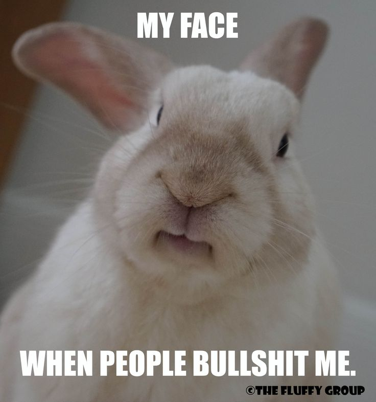 Exactly! Follow The Fluffy Group on Instagram, Facebook and Pinterest. Memes, bunny care tips and tricks, and simple adorable photos of the bonded neutered cage-free duo. <3