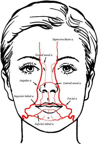 Lip Vascular Anatomy