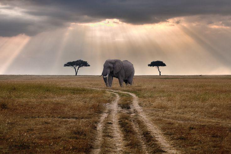Masai Mara, Tanzania  Road through Mara (by merlune)