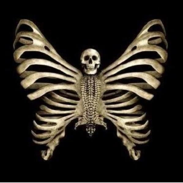 385 best Skulls &- Skeletons images on Pinterest