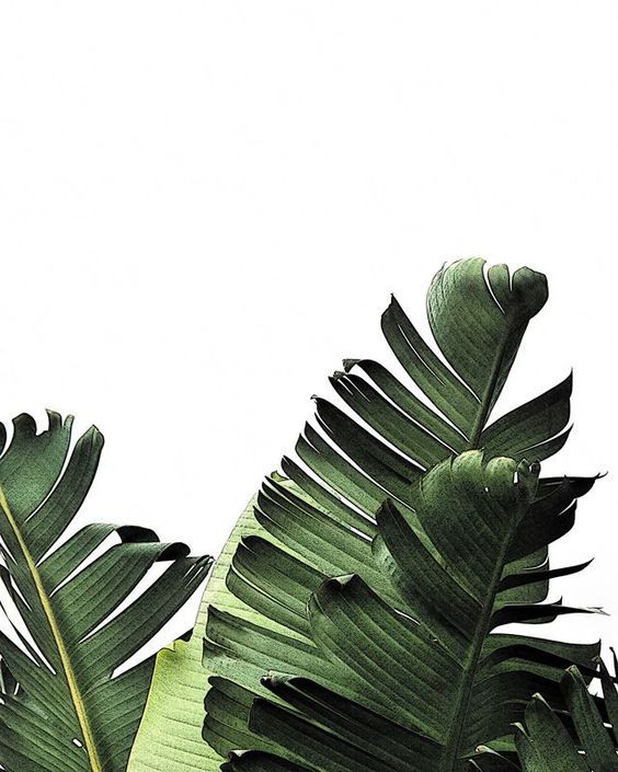 palm leaves all year long