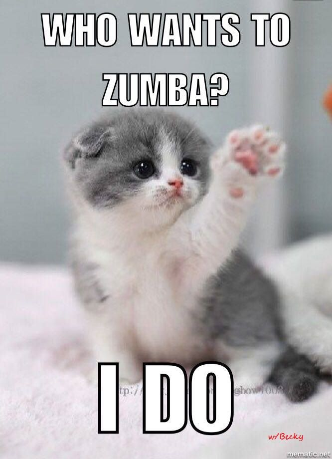 Everything you need to know about zumba Zumba cute kitten who wants to Zumba I do Becky