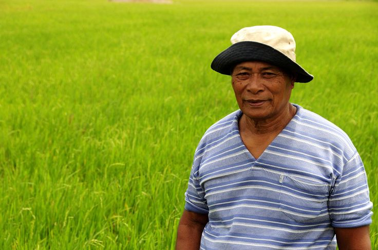 Rice farmer Ismael Puerto, 70, stands proudly in a rice field in a small community on Panay Island in the Philippines.