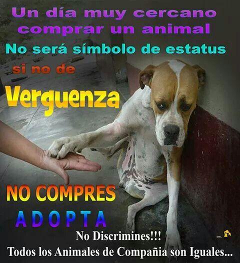 #perros #NoAlMaltratoAnimal #AdoptaNoCompres #callejero