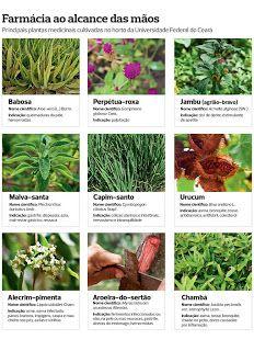 Jornal de Saúde: Plantas medicinais apenas 12 plantas de um estudo ...