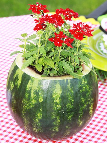 Save the empty Watermelon and fill it full of wild flowers, great camping centerpiece.