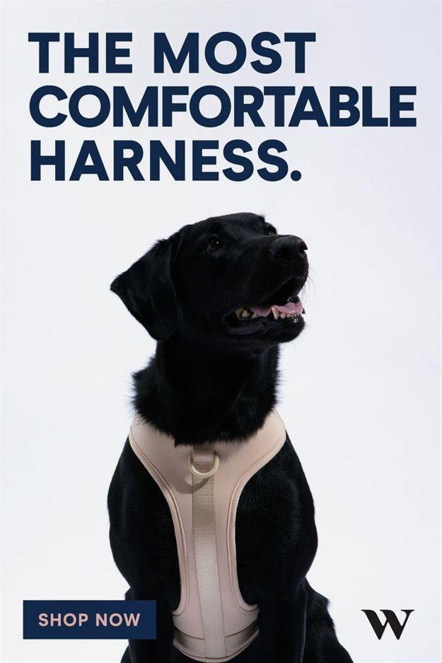 Cardinal Dog Training Huntley Il Dog Training Utility Belt