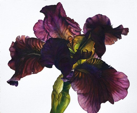Iris series 7 Rosie Sanders