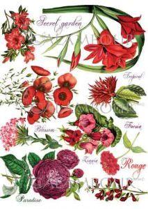 DGR 311 - papier ryżowy - Botanical -Paradise