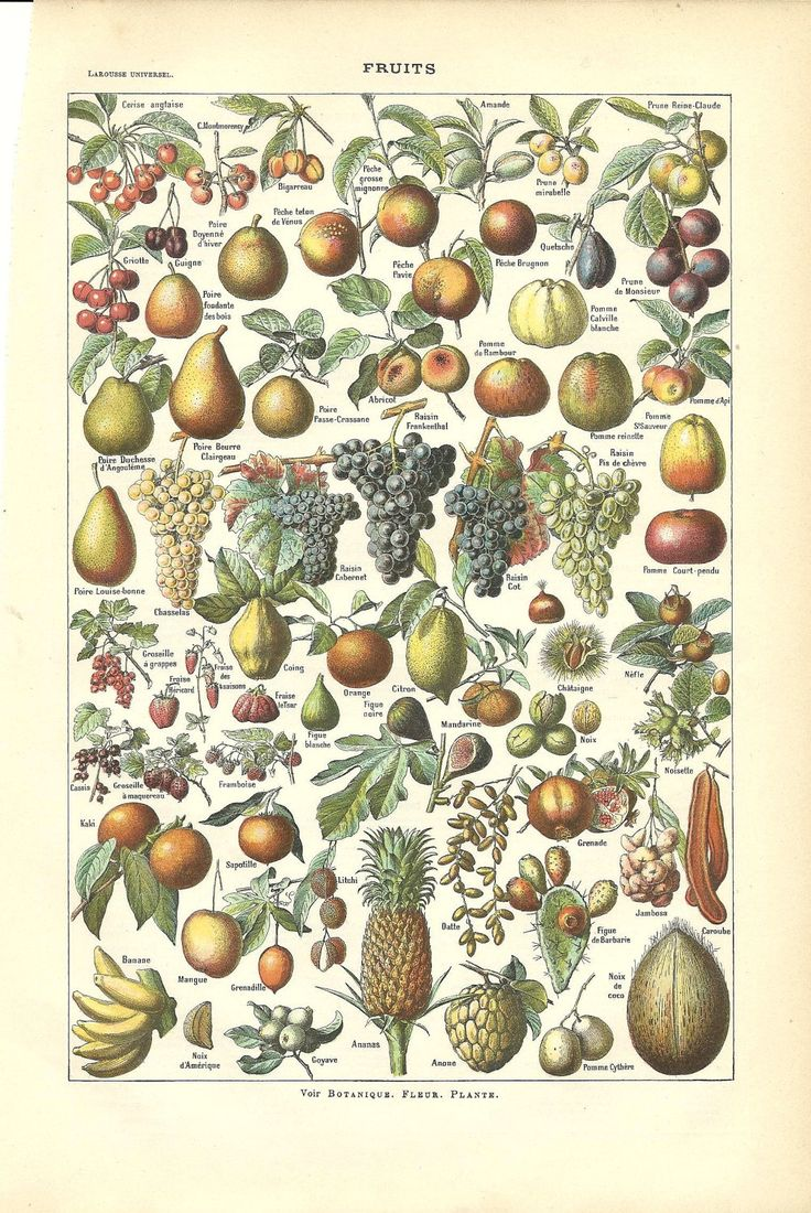 Bedroom english french dictionary wordreference com - Antique Botanical Poster Print Fruits French Dictionary Color Illustration
