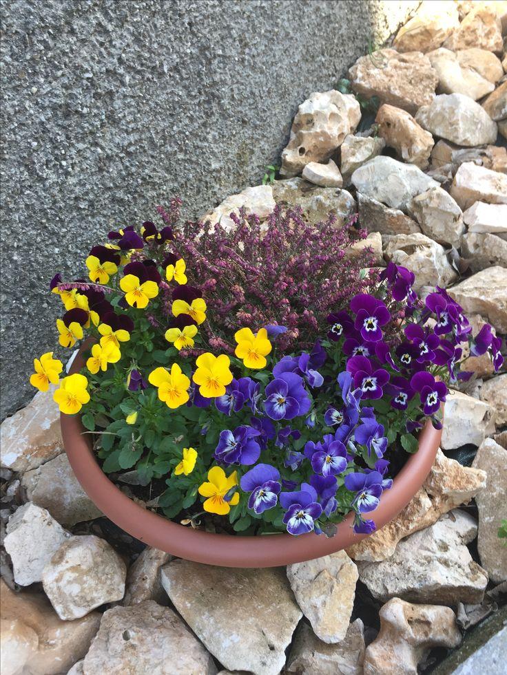 Vaso contenente Erica lilla e viole del pensiero di tre sfumature di colore. Resiste all'inverno e fiorisce all'inizio della primavera. Da un tocco di colore ad ogni giardino