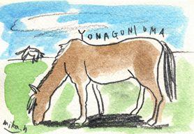 与那国には  まだ行ったことがありません。  この小さな与那国馬に乗ったまま  海水浴をするのが夢です。