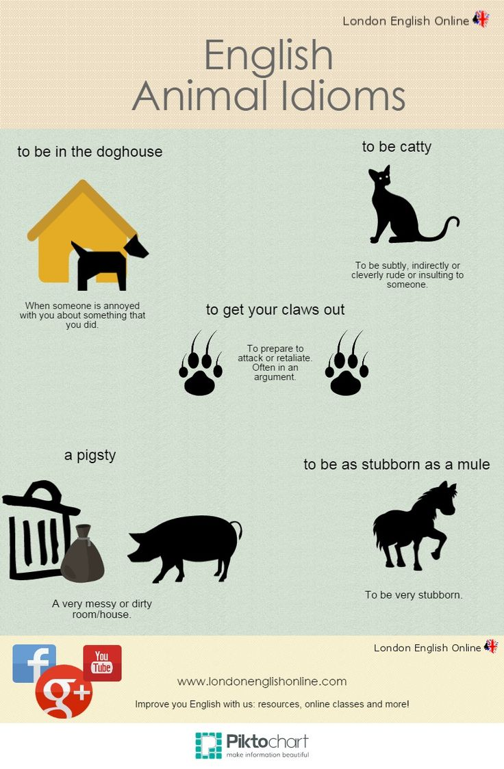 Don't want to be in the dog house? Check out our animal idioms! LEO :)