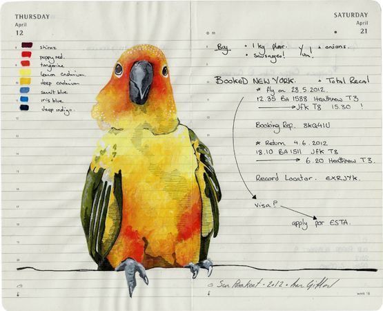 Quirky #parrot #bird #illustration Fran Giffard. 2012