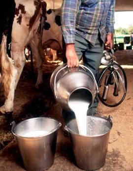 Milk from our neighbor's farm