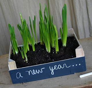 Clementine boxes make great mini gardens for forced bulbs.