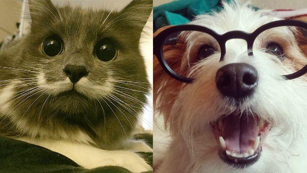 Δείτε τα κατοικίδια με τους περισσότερους Instagram followers. Πρωταγωνιστούν σκύλοι, γάτες, σκαντζόχοιροι, γουρούνια, τσιντσιλά, παπαγάλοι και σκίουροι. - #SocialMedia #SocialNetworks #Instagram #pets #animals