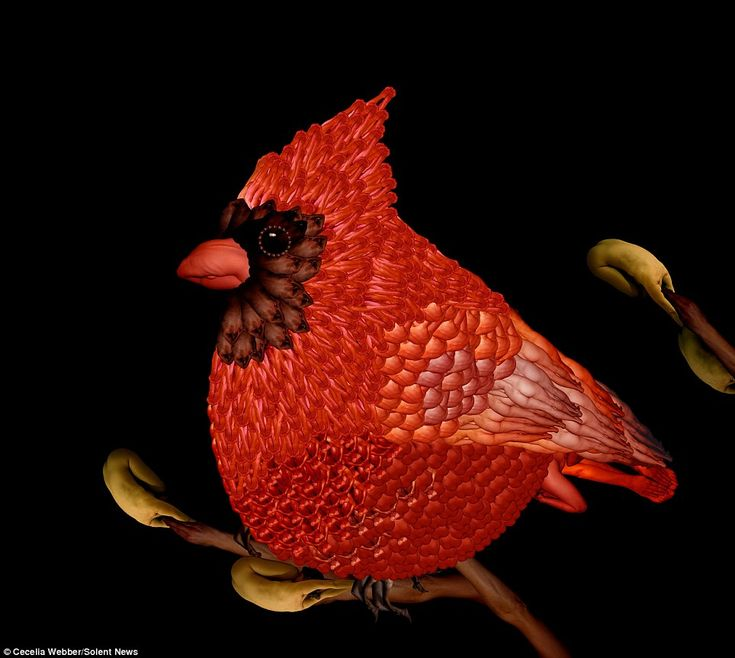 Bird's eye view: Look closely and you'll see this beautiful picture of a colourful bird is made up entirely from images of humans