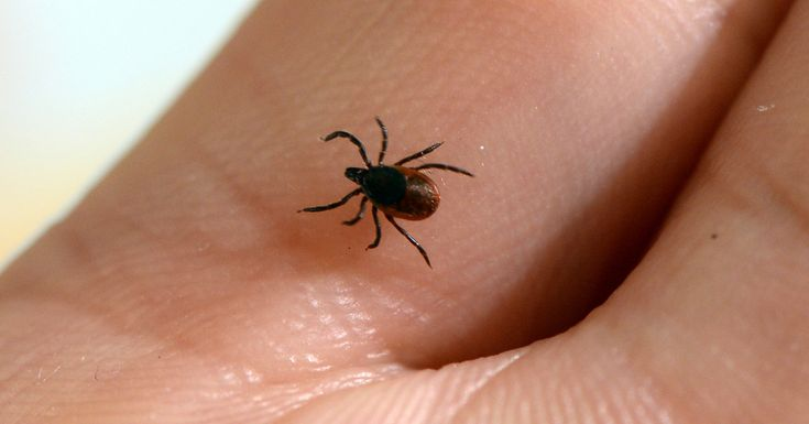 Experts say warmer winters caused by climate change are allowing ticks to expand into new regions of the U.S.