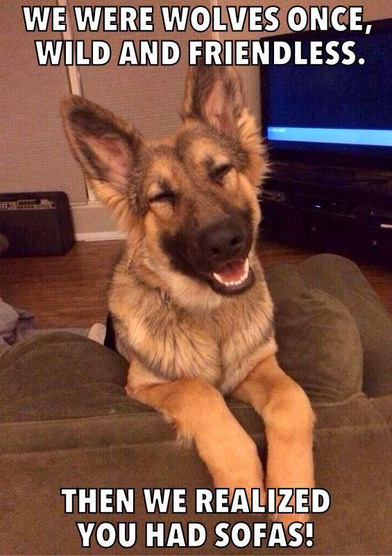 una vez fuimos lobos, slvajes y no amigables. luego endendimos que uds tenian sofas!! haha