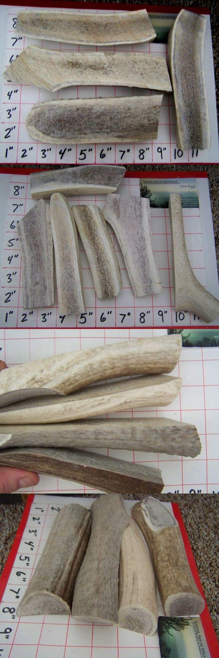 Dog Chews and Treats 77664: 2 Lbs Antler Dog Chews Deer Elk Treats Split Antler Chews - Look At Quantities!! -> BUY IT NOW ONLY: $47.99 on eBay!