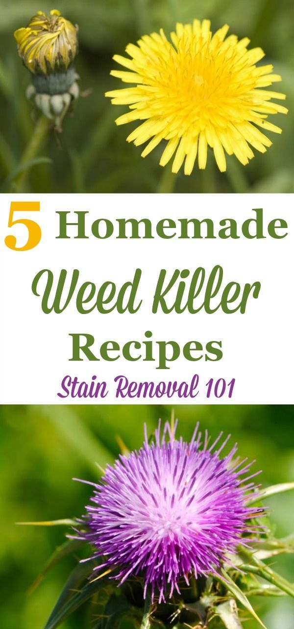 5 homemade weed killer recipes that you can use for isolated weeds to kill them…