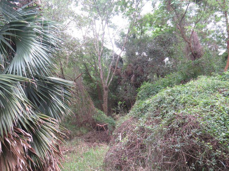 sabal palm sanctuary, brownsville texas