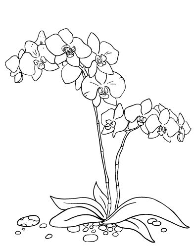 Printable orchid coloring page. Free PDF download at http://coloringcafe.com/coloring-pages/orchid/