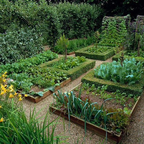 A series of box-edged beds of leek, cabbage, spinach, carrot, lettuce and Hemerocallis flava. Top: cordon apples, beans on bamboo tunnel. © Nicola Stocken Tomkins. Countryside April 2013.