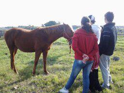 """Mi caballo """"Bruto"""""""