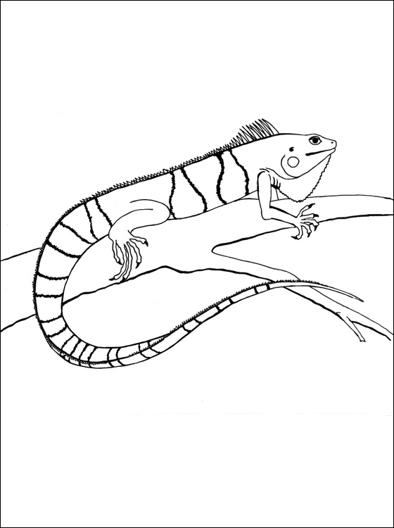 17 best images about vbs 2013 on pinterest crafts for Iguana coloring pages