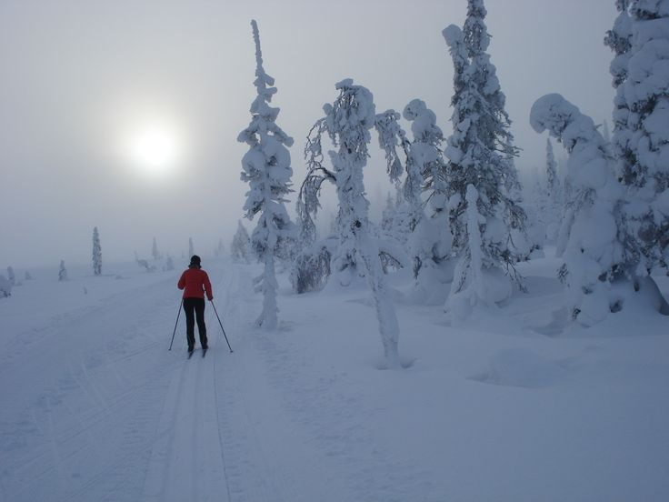 Cross-country skiing in the National Park Syöte, Taivalkoski, Lapland, Finland