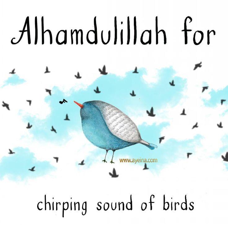 30. Alhamdulillah for chirping sound of birds. #AlhamdulillahForSeries