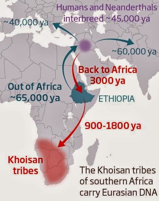 Recent African origin of modern humans