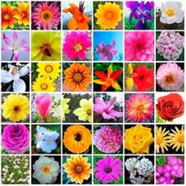 SAIKU ALTERNATIVO: COMO DEJAR LAS DROGAS con las esencias florales de...