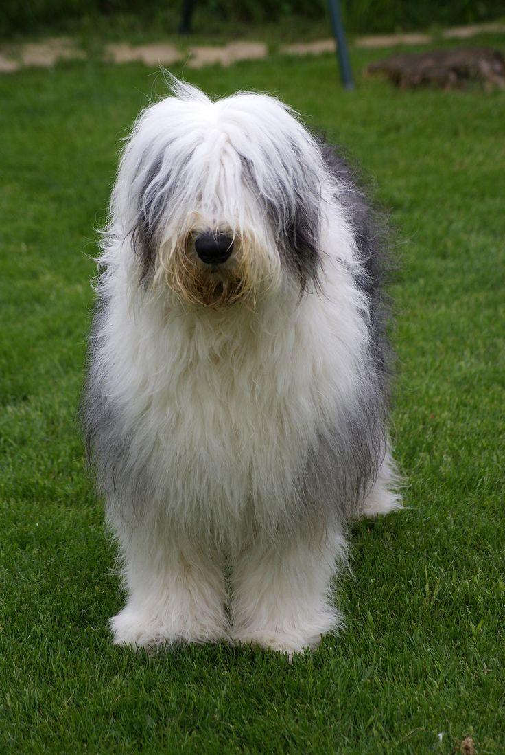 https://flic.kr/p/bU2y5z | Jacky | My Dogy