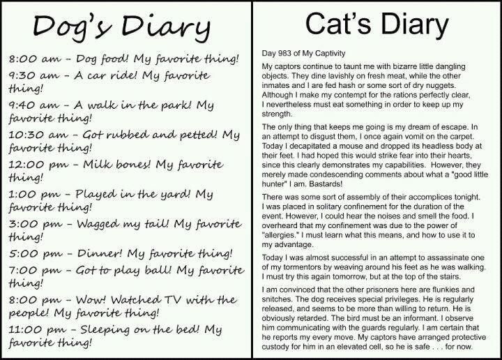 Oh my life this is too funny! Dog's Diary vs Cat's Diary. The cat's diary had me laughing way too hard!
